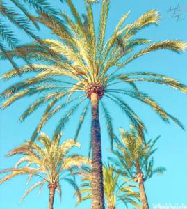 Palms tree pics