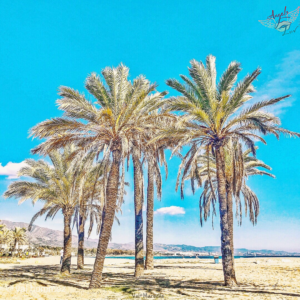 palms breeze salt life costa del sol beach